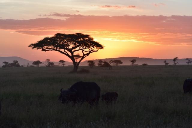 12月12日 独立記念日( ケニア)
