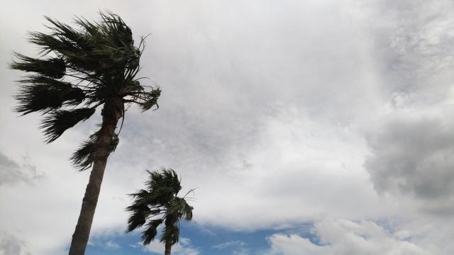 2月9日 風の日