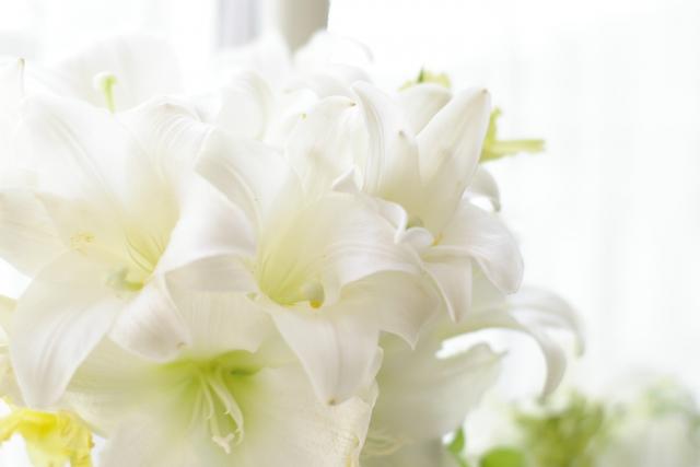 2月24日の誕生花 アマリリス