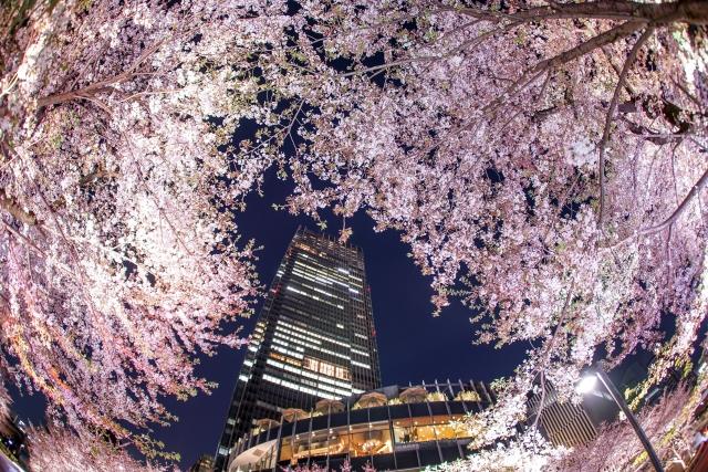 東京ミッドタウンと桜