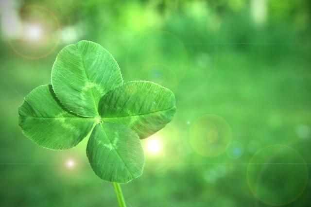 4月2日の誕生花 クローバー(四つ葉) - 花言葉は「幸運」「私のものになって」