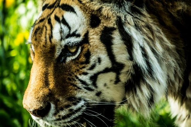 3月3日 世界野生生物の日:国際連合