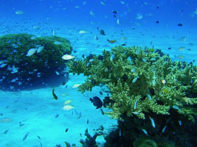 3月5日 珊瑚の日