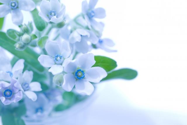 3月8日の誕生花 ブルースター