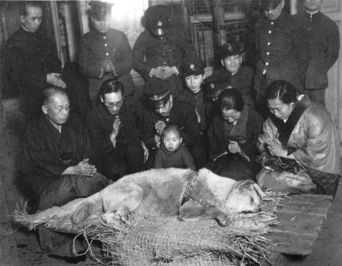 3月8日 「忠犬ハチ公」死去:1935年