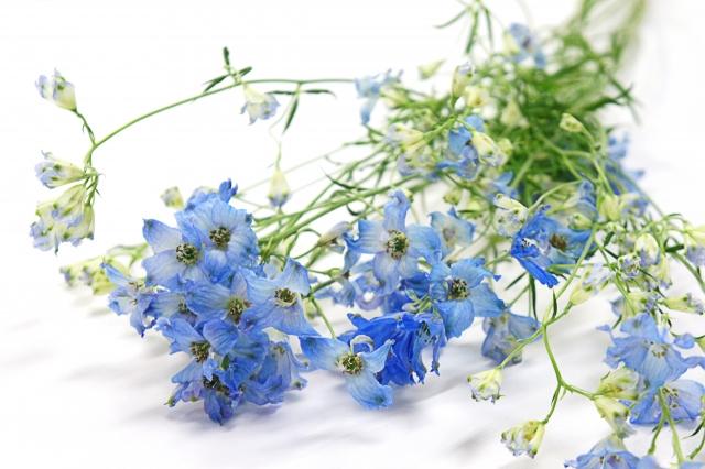 4月17日の誕生花 ラークスパー - 花言葉は「陽気」「快活」