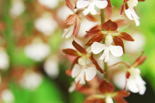 4月26日の誕生花 エビネ - 花言葉は「謙虚」「謙虚な恋」