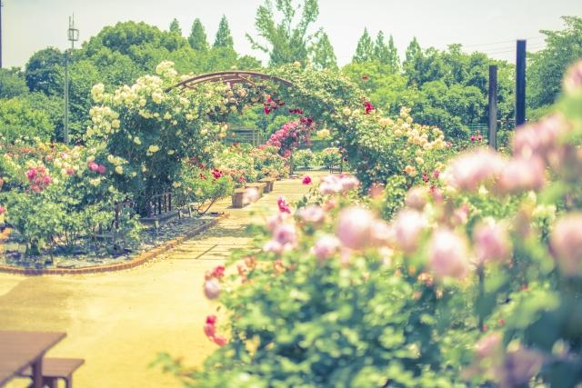 5月4日 植物園の日
